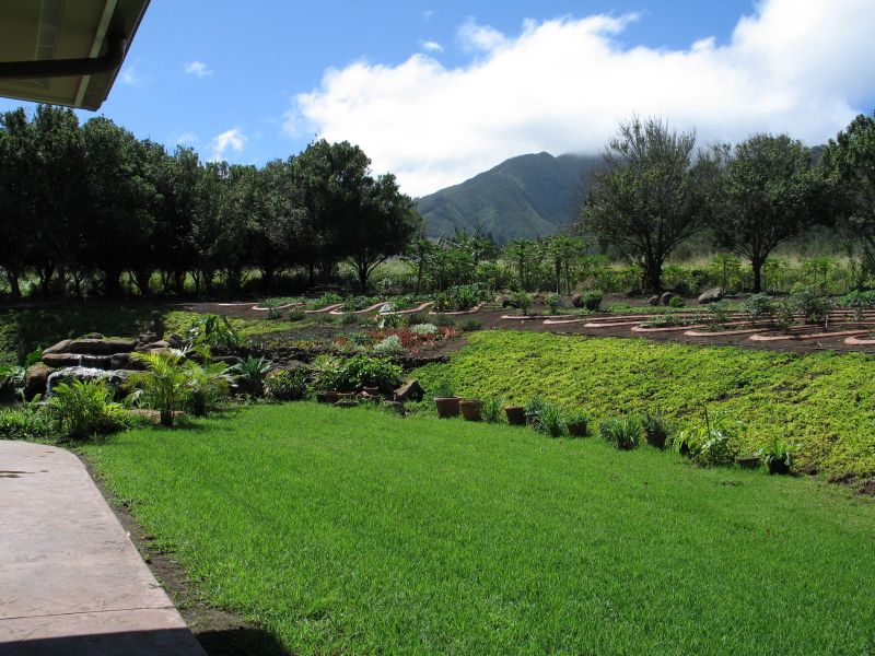 Organic Gardens in Wailuku Maui, Hawaii