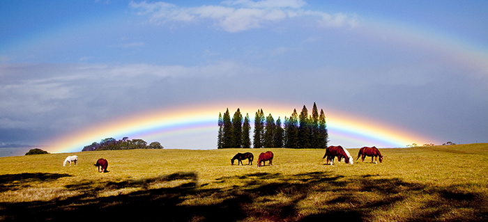 Rainbows and Horses , Upcountry Maui, Hawaii